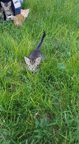 Kittens enjoying the outdoors