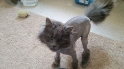 Judith had to be shaved when she first arrived