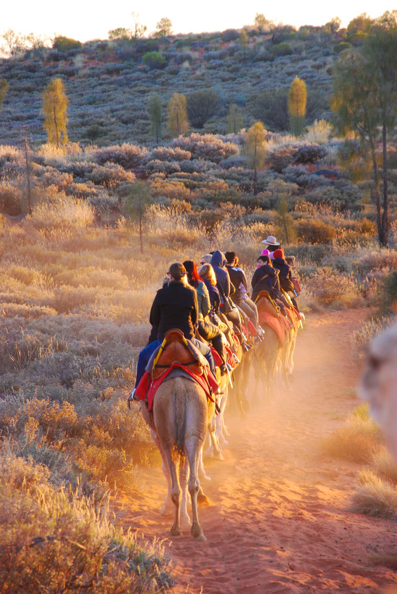 Uluru Camel Tour