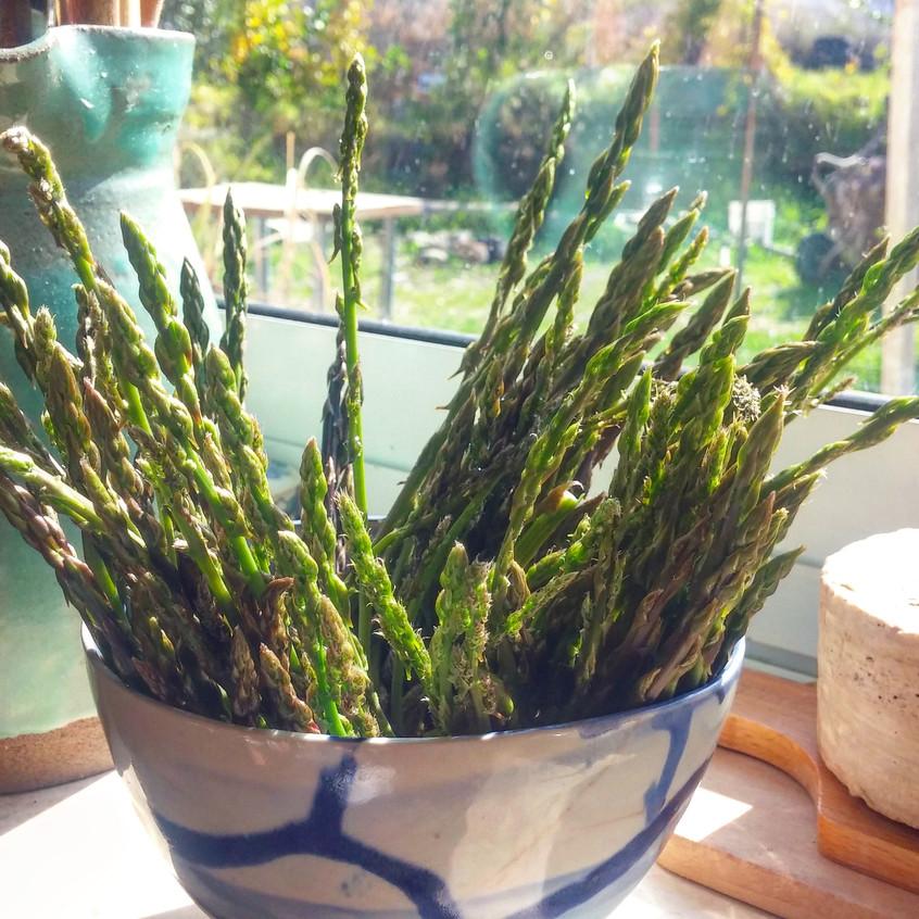 אספרגוס - ירק של החורף