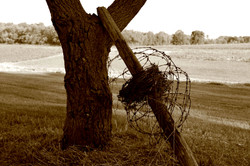 Barbed wire and fence post