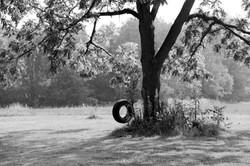 Tire swing.