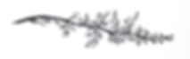 Branch Upscale NBG.png SMALL.png