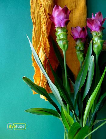 dyeluxe turmeric peel dyed scart nfturmeric plant
