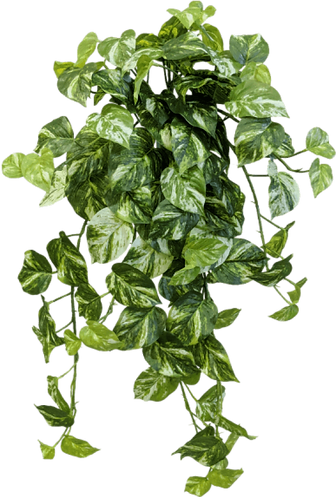 Cute Ivy Plant.png