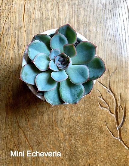 Les petites plantes