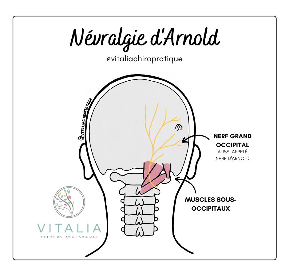 Névralgie d'Arnold ; Nerf Arnold