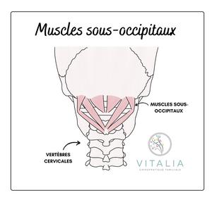 Muscles sous-occipitaux - Céphalées de tension - Maux de tête