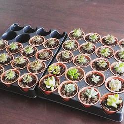 Succulent pick up today! $4 each _#succulents #minisucculents