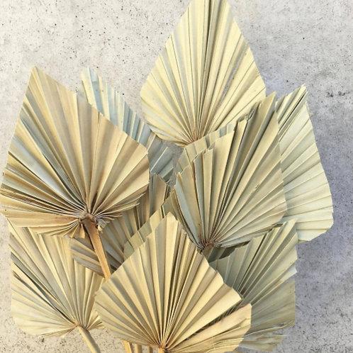 Anahaw Leaf- Dried Small