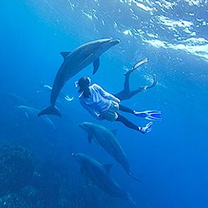 nage dauphins.jpg