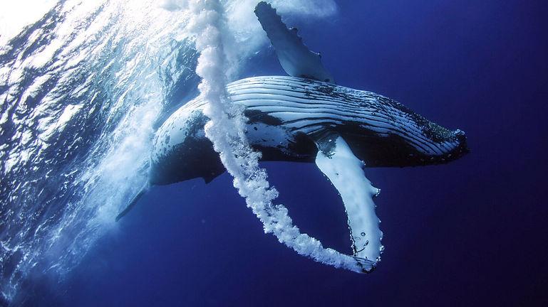 englouti-par-une-baleine-pecheur-america