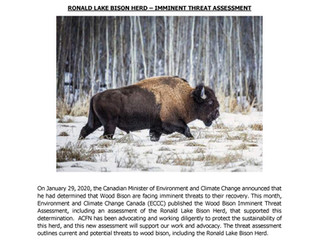Imminent Threat Assessment for Wood Bison - Ronald Lake Bison Herd