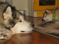 Juno and Tacoma 005
