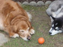 Sadie&friend0408
