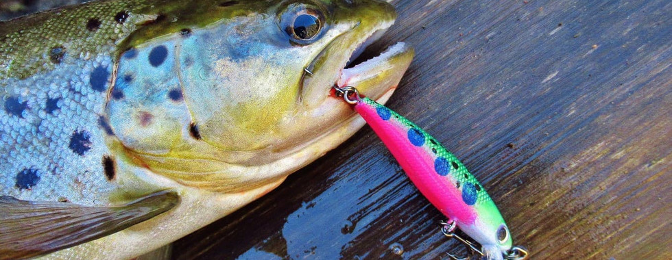 wix trout baby bow 2.jpg