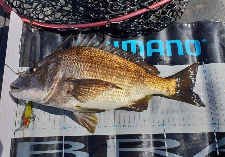 BREAM - LSP55S WILBS