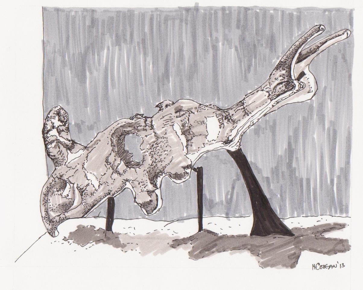 Dinosaur.Skull.2013