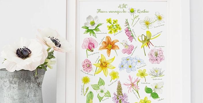 HOBEIKA ART - Affiche ABC des fleurs sauvages du Québec