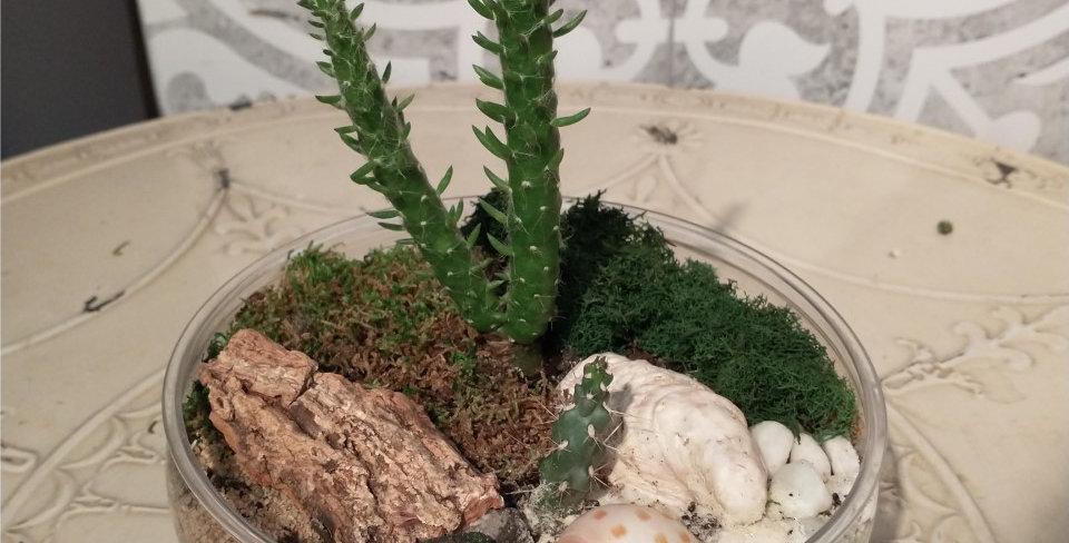 Terrarium ouvert - cactus