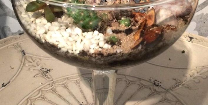 Terrarium coupe en verre géante - cactus