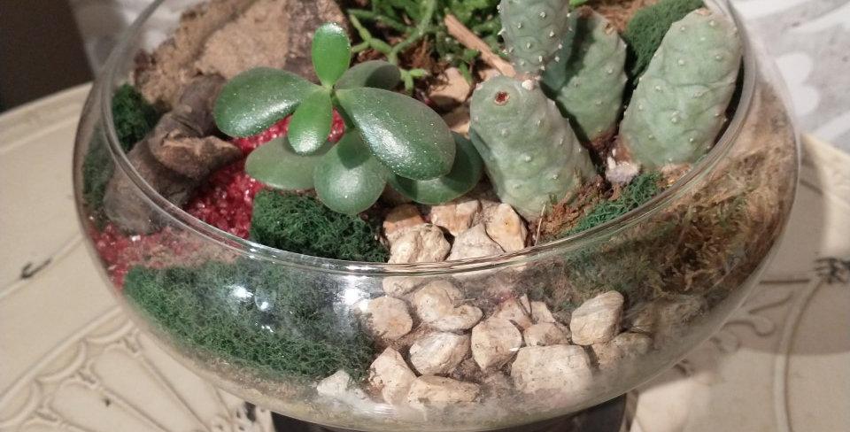Terrarium ouvert rond - cactus et succulents