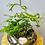 Thumbnail: Terrarium en verre rond