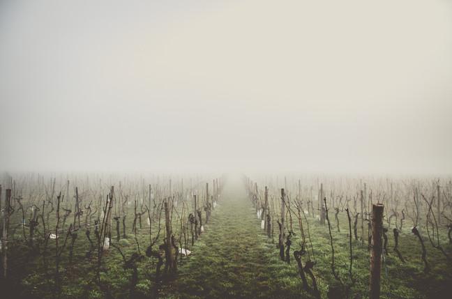La récolte de raisins Bordelais a-t-elle étéimpactée par le gel en 2017?