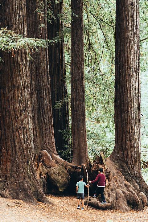 adventure-bark-children-3042582.jpg
