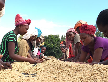 EthiopiaRaisedBeds.JPG