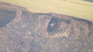 cliff swallow_Deane Chapel_Henry Zylstra