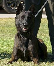 K-9 Dutch Santa Clara Sheriff