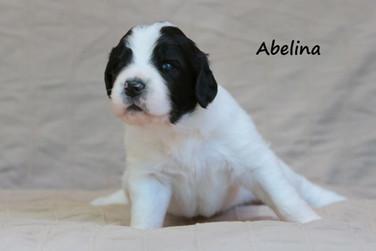 Abelina