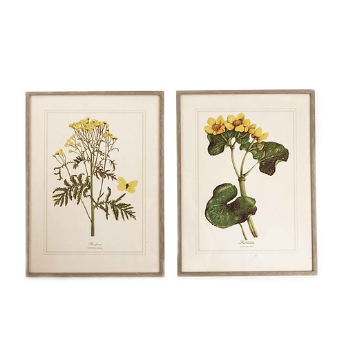 Aquarelles of Swedish Summer Flowers