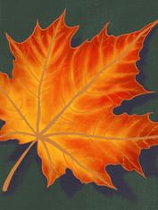 Autumn leaf study