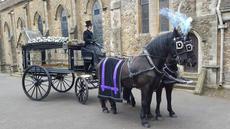 Black horses with blue.jpg