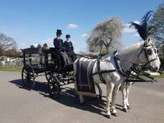 White horses black carriage