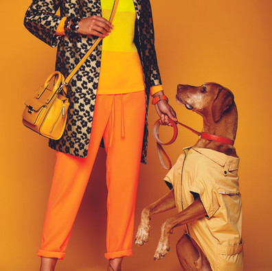 Fashion & Canines