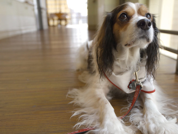 Sit, Stay, Heal: Paws-on Therapy for Long-Term Care Residents