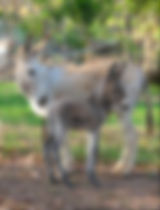 Clancy Foal2modified23Dec06.JPG