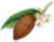 kisspng-theobroma-cacao-cocoa-bean-choco