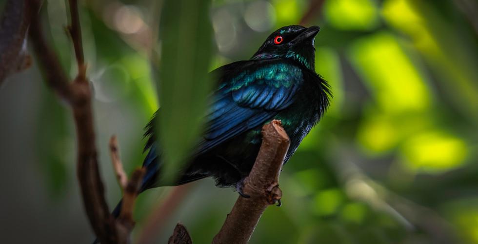 Birds5_2020_3.jpg