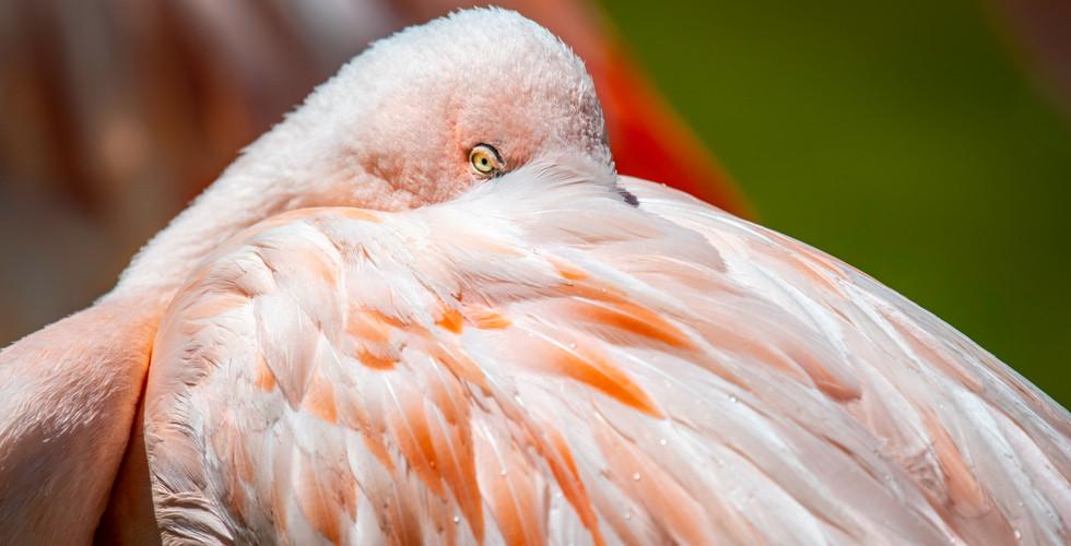 Birds5_2020_17.jpg
