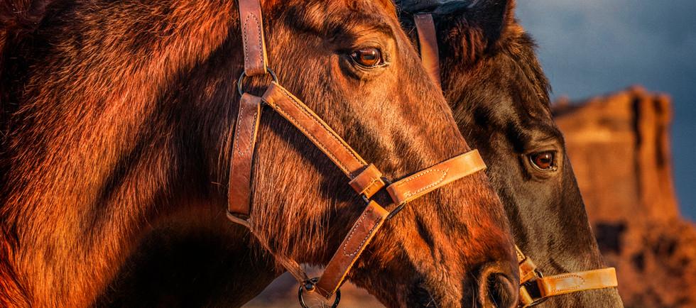 Horses_WEB.jpg