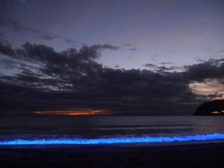 SEVEN BEACH Light Up FES サポーター募集のお知らせ