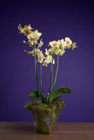 Edwin 3 Flowers E Malone-7.jpg