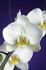 Edwin 3 Flowers E Malone-2.jpg