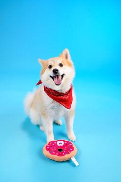 Dog Box Final 35-3.jpg