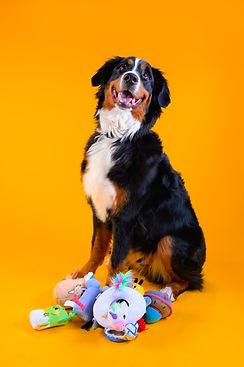 Dog Box Final 35-17.jpg