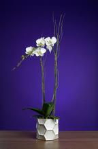 Edwin 3 Flowers E Malone-1.jpg